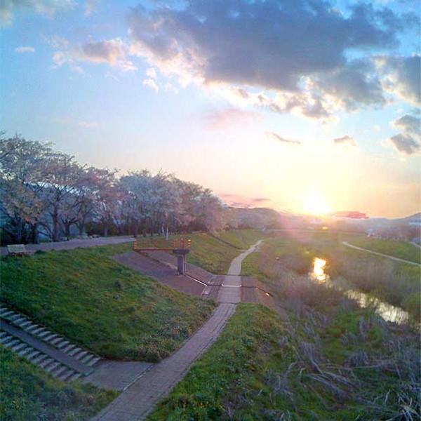 Sakura2010_640