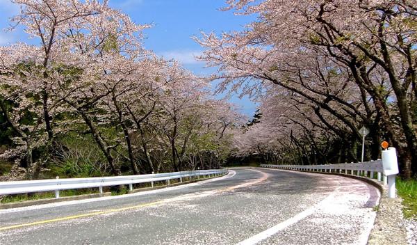 Sakurahakone